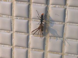 クモ対ハチ_640.jpg
