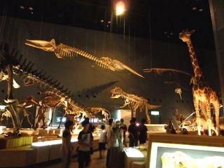 恐竜展示_640.jpg
