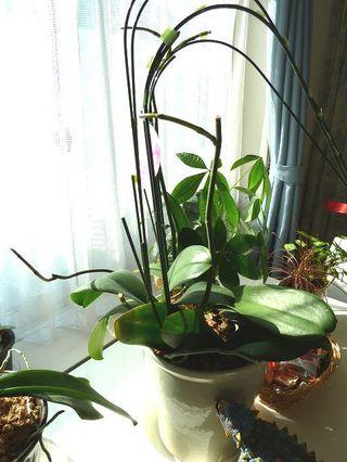 植物の芽.jpg