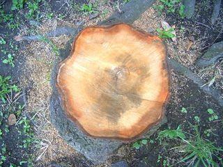 木の年輪_640.jpg