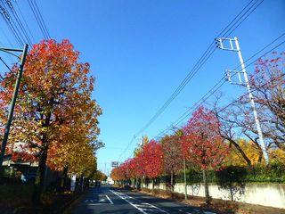 紅葉・黄葉3_640.jpg