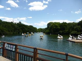 井の頭公園2_640.jpg
