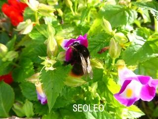 熊蜂2_640.jpg