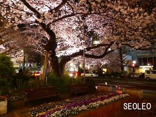 夜桜4_640.jpg