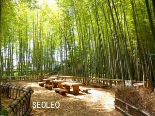 竹林公園_640.jpg