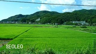 緑の絨毯=稲・_640.jpg