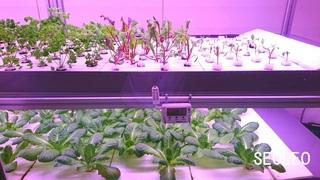 植物工場2_640.jpg