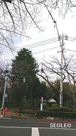 桜の木の剪定_640.jpg