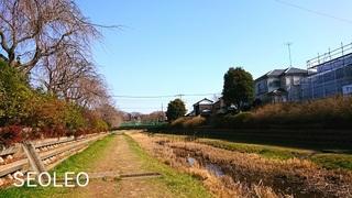 野川6_640.jpg